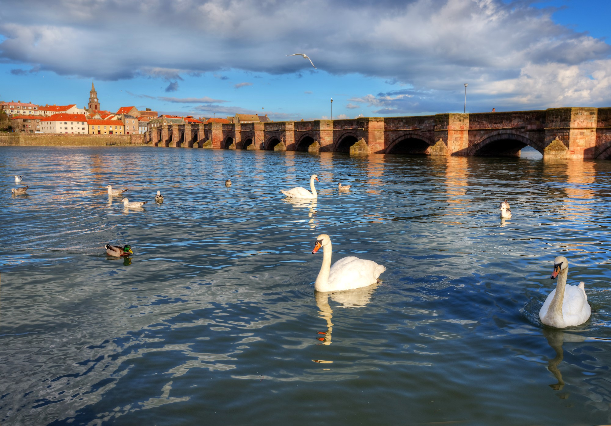 Berwick upon Tweed (2)