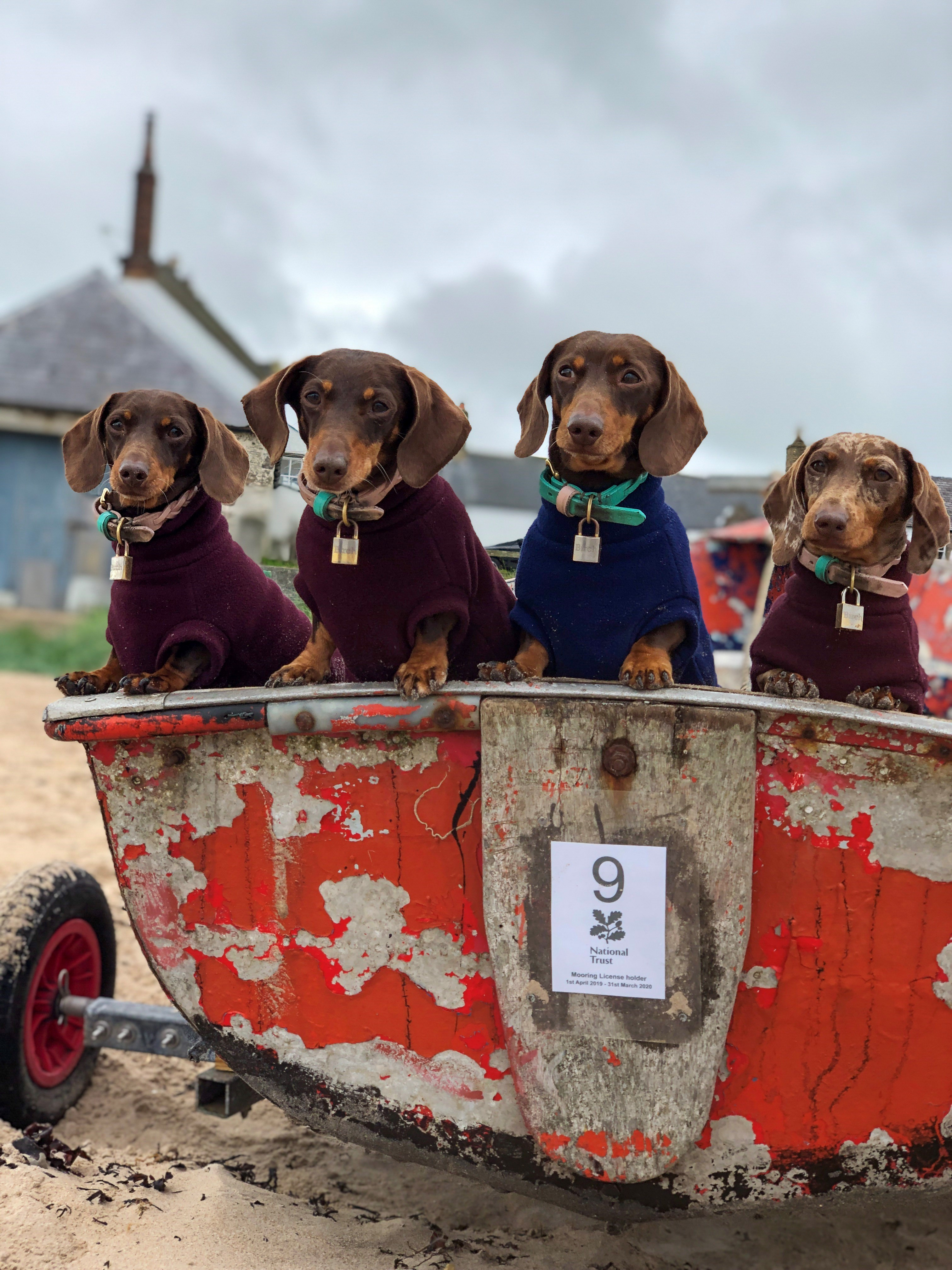 Third time's a charm - holiday cottages welcoming three dogs