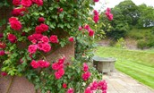 Old Mill Cottage - garden roses