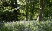 Garden House - bluebell woods